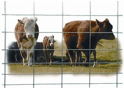 Wire Cattle Panels