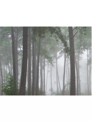 Fog Forest #130