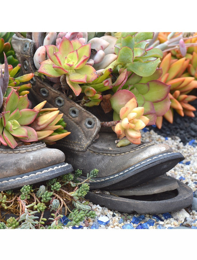 Succulent Shoes #274