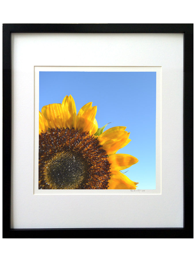 Sunflower #52