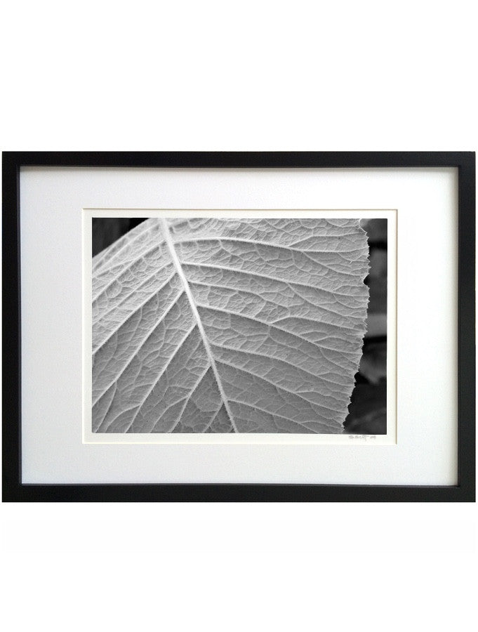 Leaf Structure #232