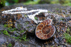 Ammonite Fossil Shell Necklace | Fossilized Shell Necklace | Ammonite Pendant | Nautilus Necklace