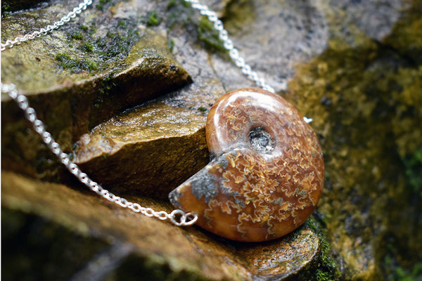 Full Ammonite Fossil Shell Necklace | Fossilized Shell Necklace | Ammonite Pendant - Enchanted Leaves - Nature Jewelry - Unique Handmade Gifts