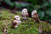 Barn Owl Totem Necklace
