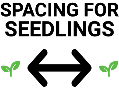 Space Between Seedlings