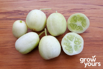 Cucumber 'Crystal Apple'