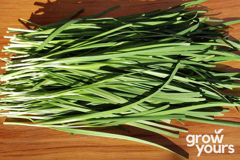 Garlic Chives grown in NZ, fresh on chopping board