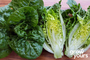 Lettuce Little Gem freshly picked on chopping board