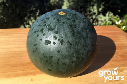 Watermelon 'Sugar Baby'
