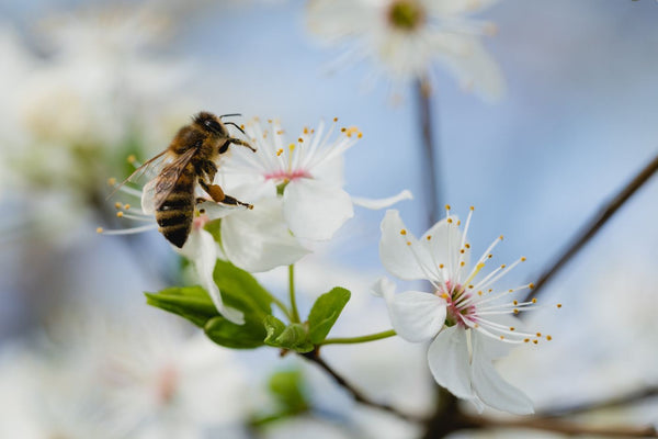 OUR FAVOURITE BEE-FRIENDLY BRANDS