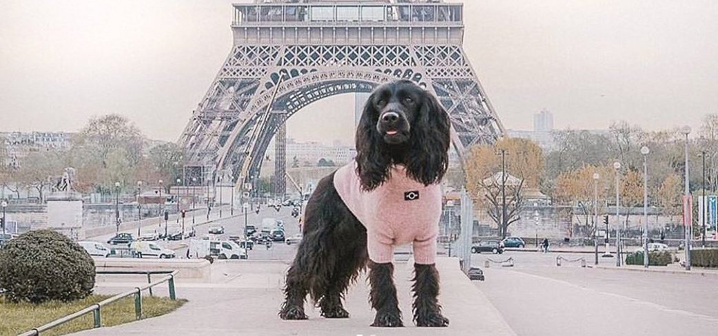 Ultimate Essentials to Bring when Traveling with Your Dog - OVERGLAM LONDON