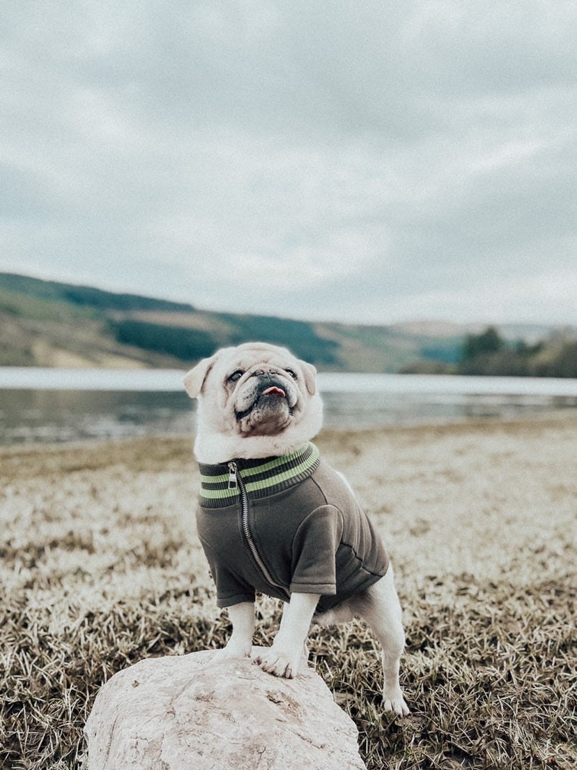 A dog posing in a field with an Over Glam Thin Jacket
