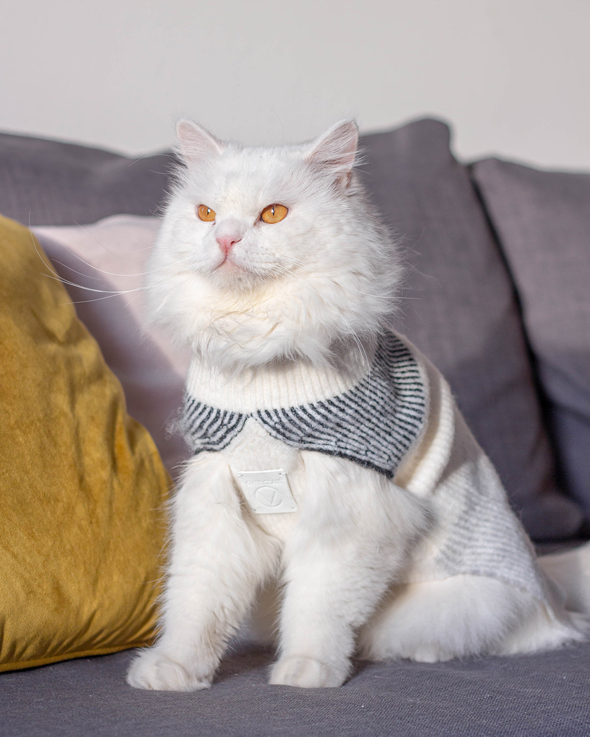 A cat with an OverGlam jumper posing on a grey couch