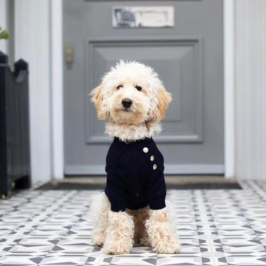 A dog on a navy jumper
