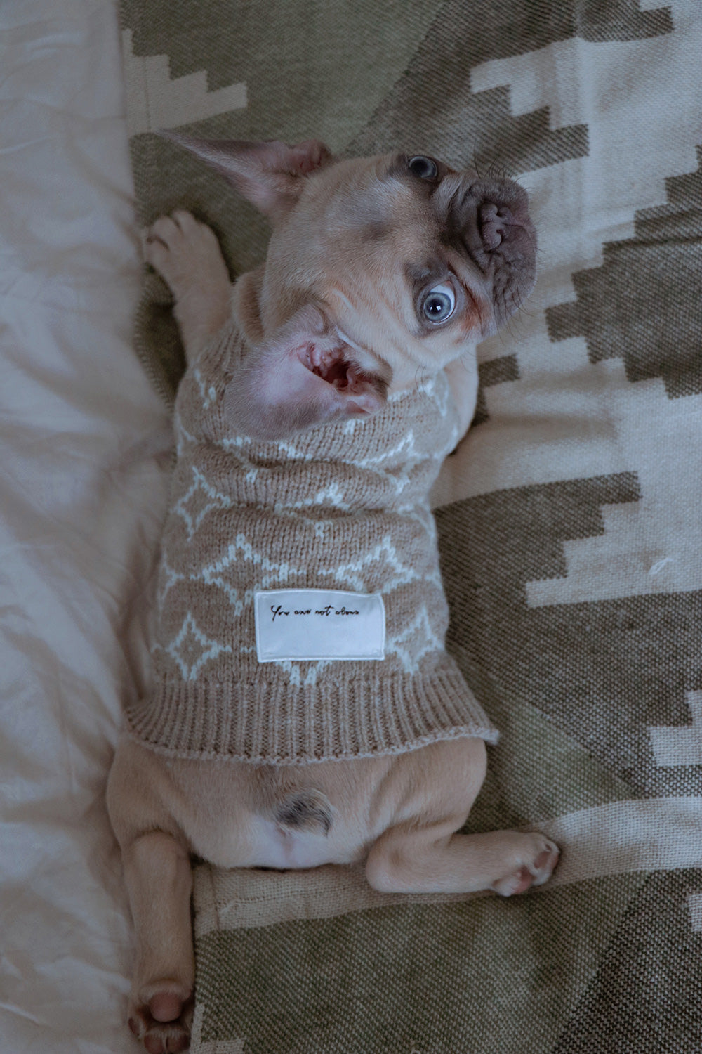 A dog with an OverGlam jumper laying in a bed