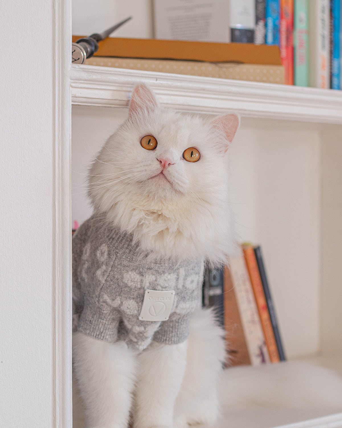 A cat with an OverGlam jumper posing on a library
