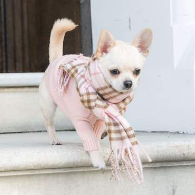 A dog with a hoodie and a scarf