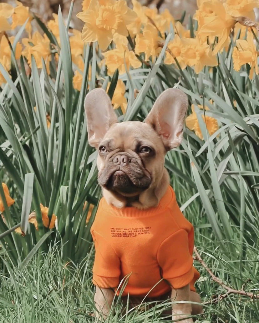 A dog posing in a park with an Over Glam sweatshirt