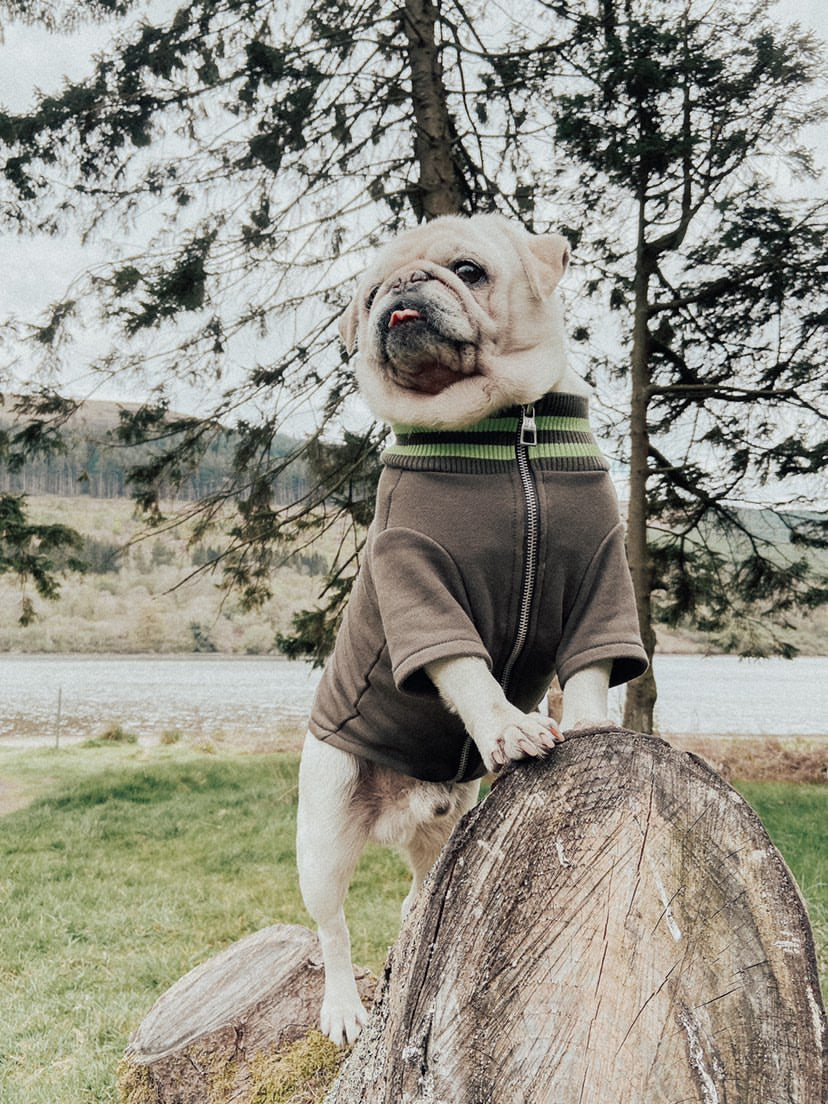 A dog posing in the wild with an Over Glam thin jacket