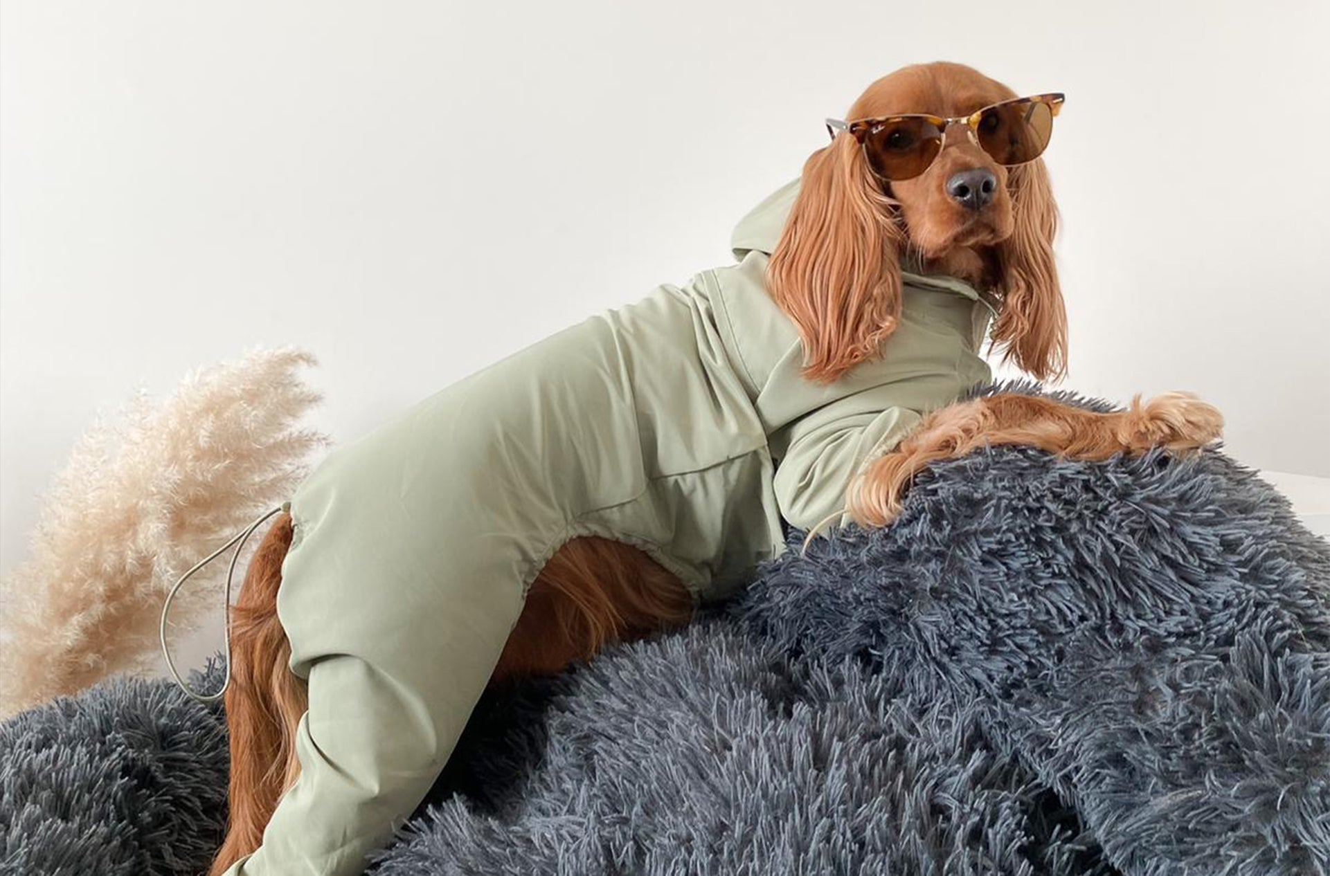 A dog posing with an OverGlam green four legged thin coat