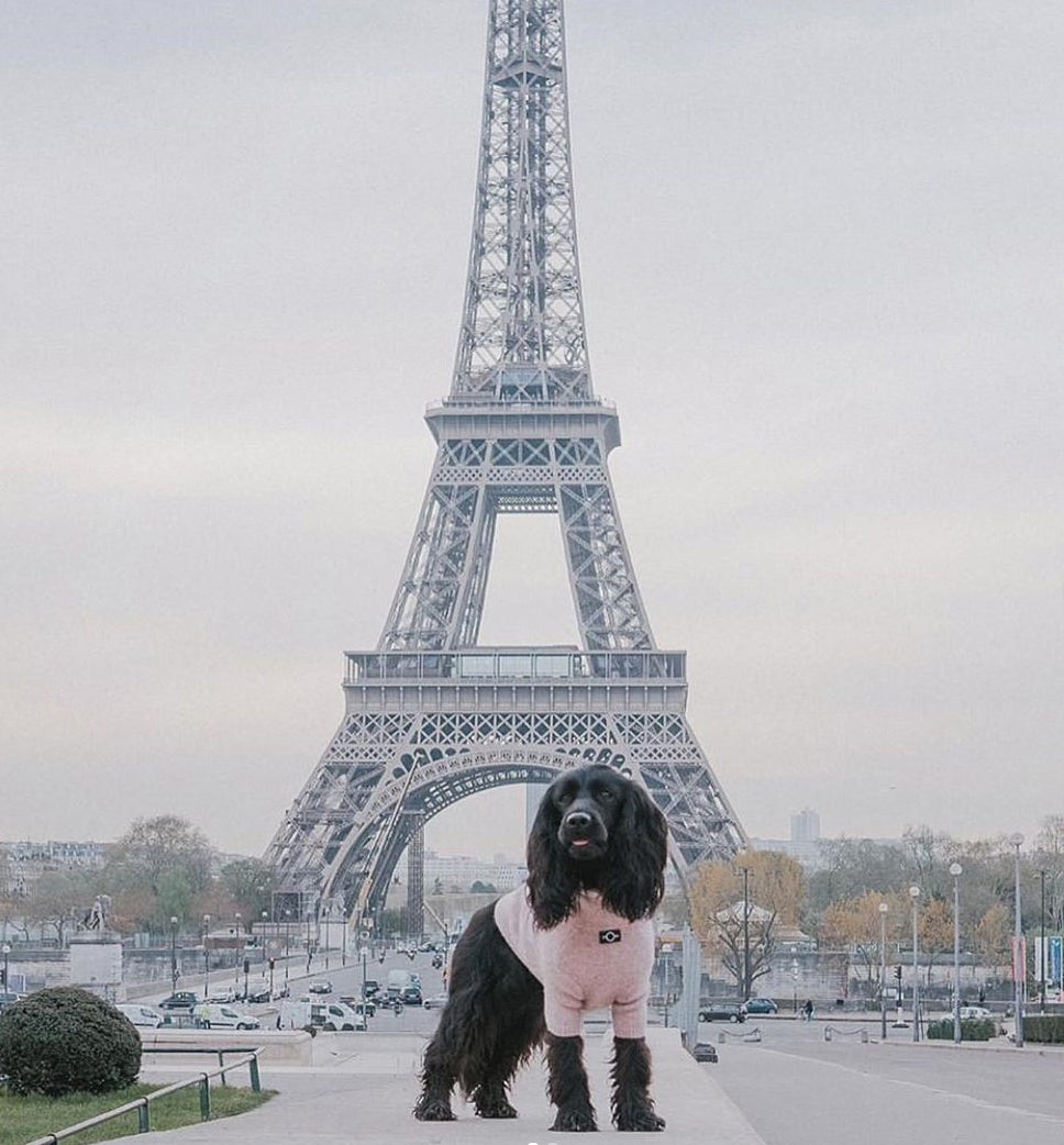 A dog posing in foront of the Eiffel tower with an Over Glam jumper