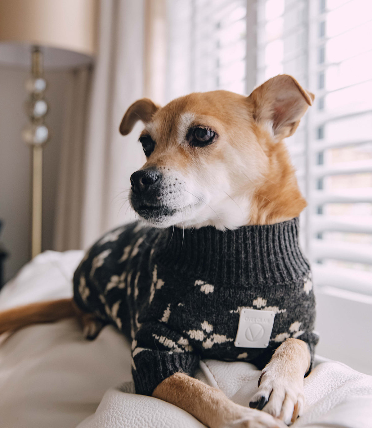 A dog with an OverGlam jumper posing on a couch