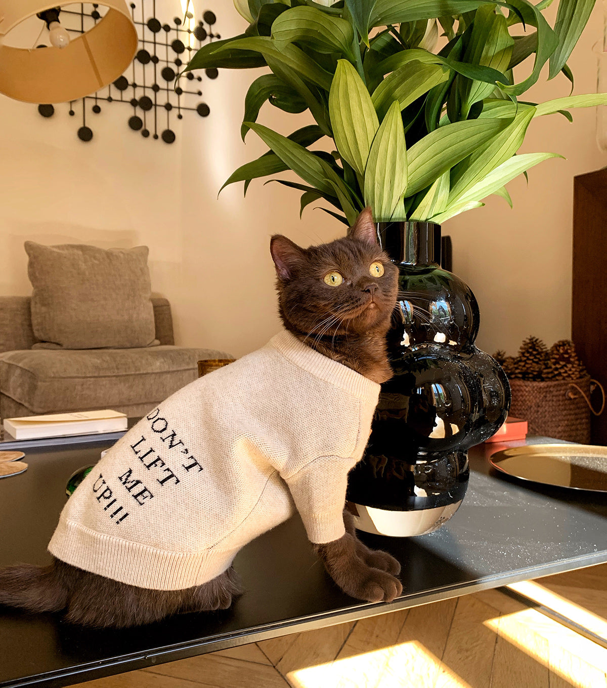 A cat with an OverGlam jumper posing on a coffee table