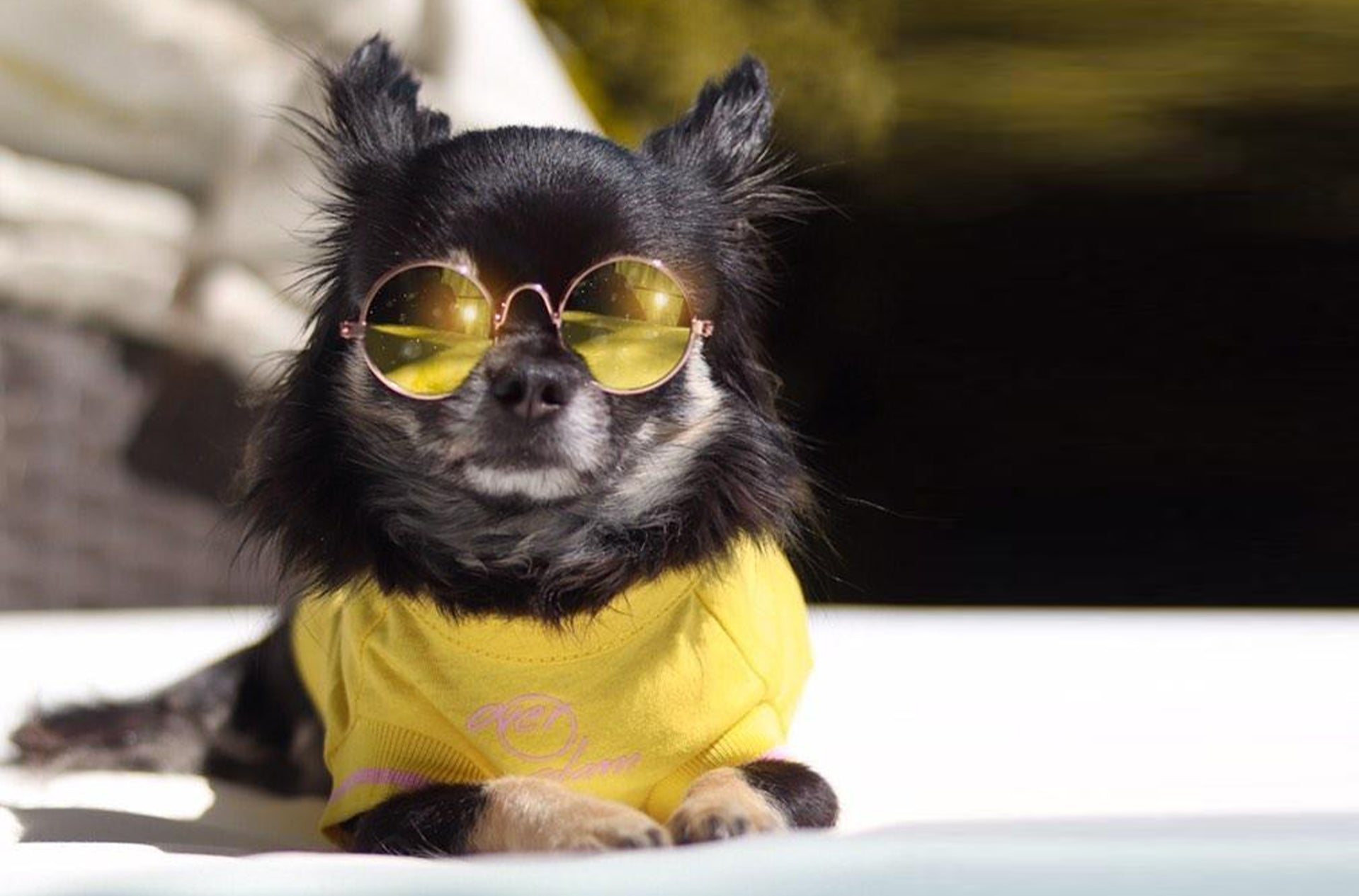 A dog posing outside with an Over Glam t-shirt