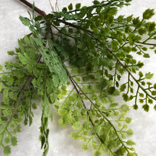 Fern adianthus Bush Stems