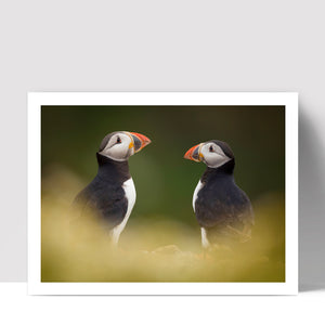 """A Pair"" - Photographic Print by Tesni Ward"