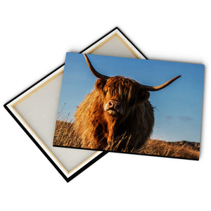 """Cattle"" - Gallery Wrapped Canvas by Tesni Ward"