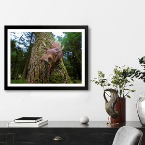 """Curiosity"" - Photographic Print by Tesni Ward"