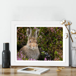 """Cute Leveret"" - Photographic Print by Tesni Ward"