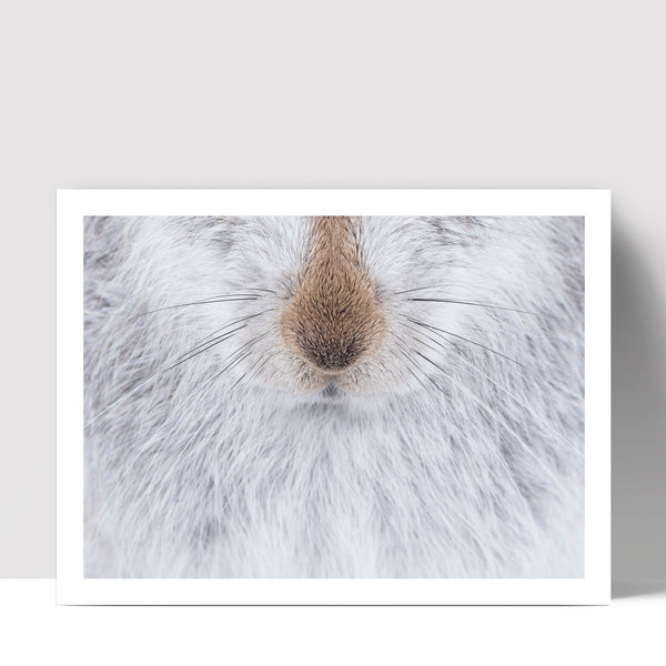"""Nosey"" - Photographic Print by Tesni Ward"