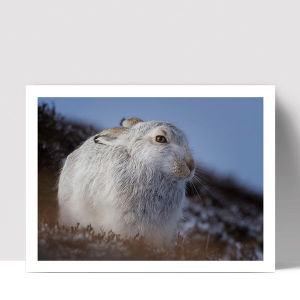 """Perched Hare"" - Photographic Print by Tesni Ward"