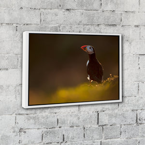 """Puffin Shoulder"" - Gallery Wrapped Canvas by Tesni Ward"