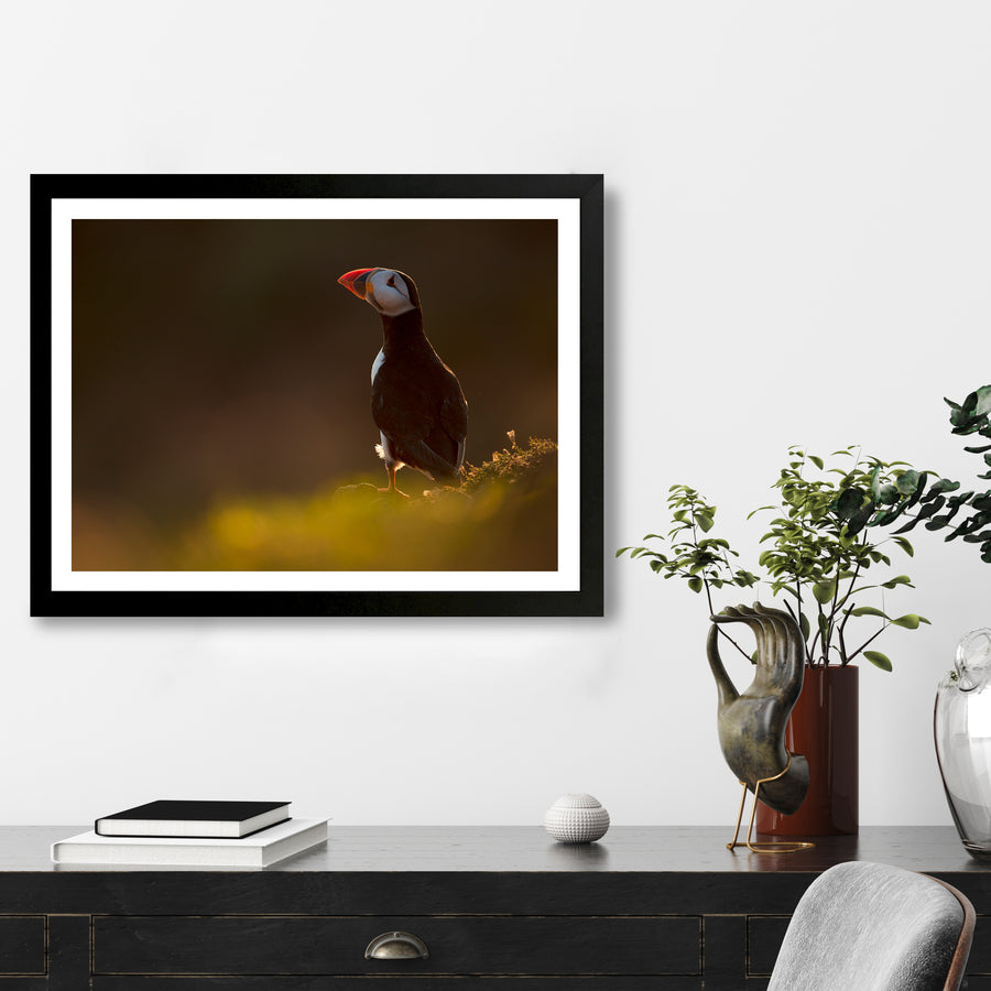 """Puffin Shoulder"" - Photographic Print by Tesni Ward"
