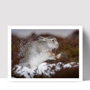 """Shake Off"" - Photographic Print by Tesni Ward"