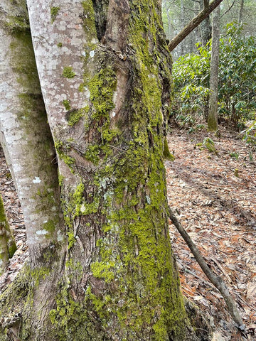 A tree trunk covered with green moss