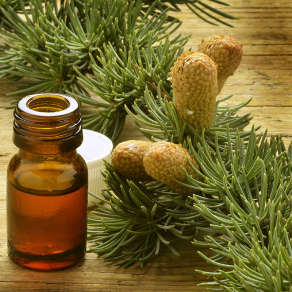Image of pine tree branch next to vile of liquid containing fragrance, link to products Fragrances collection