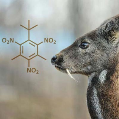 Image of a Musk Deer and the chemicakl equation