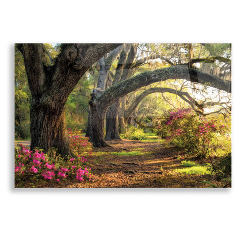 Epic Art 'Under the Live Oaks I' by Danny Head, Acrylic Glass Wall Art