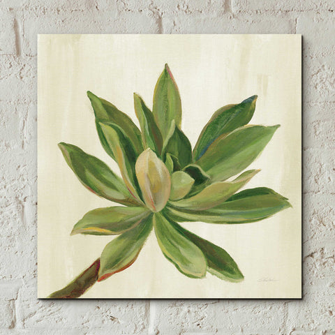 Epic Art 'Front Yard Succulent I' by Silvia Vassileva, Acrylic Glass Wall Art,12x12
