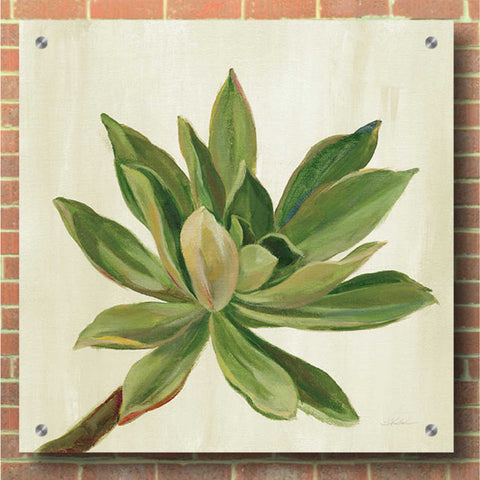 Epic Art 'Front Yard Succulent I' by Silvia Vassileva, Acrylic Glass Wall Art,36x36