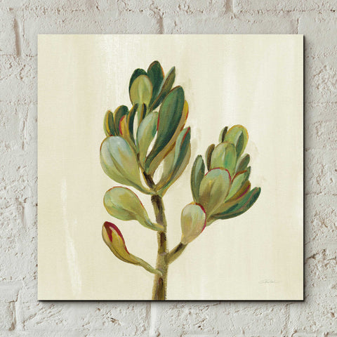Epic Art 'Front Yard Succulent II' by Silvia Vassileva, Acrylic Glass Wall Art,12x12