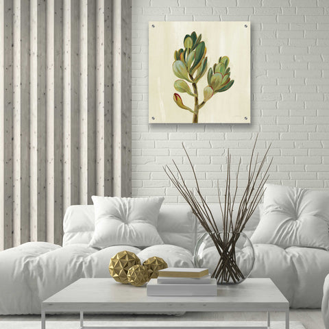 Epic Art 'Front Yard Succulent II' by Silvia Vassileva, Acrylic Glass Wall Art,24x24