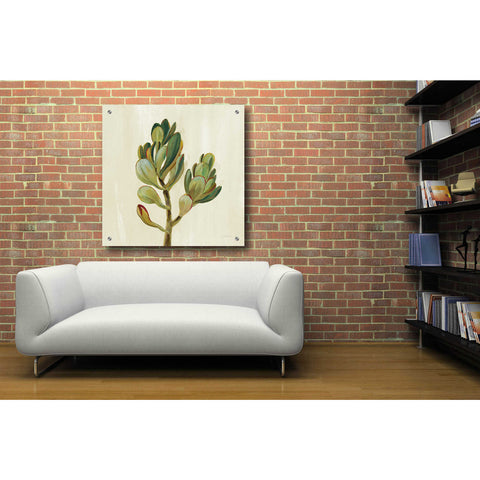 Epic Art 'Front Yard Succulent II' by Silvia Vassileva, Acrylic Glass Wall Art,36x36