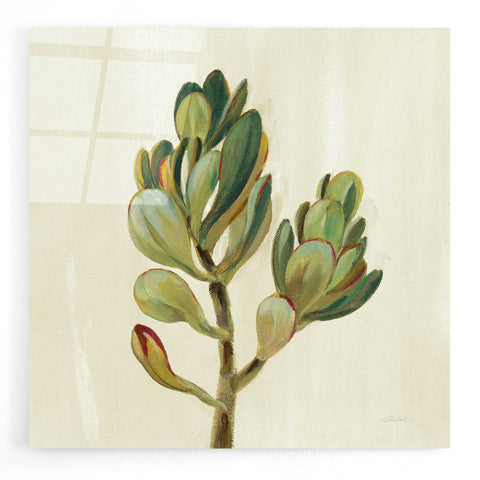 Epic Art 'Front Yard Succulent II' by Silvia Vassileva, Acrylic Glass Wall Art