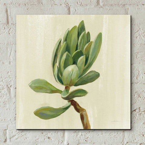 Epic Art 'Front Yard Succulent III' by Silvia Vassileva, Acrylic Glass Wall Art,12x12