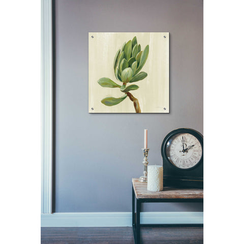 Epic Art 'Front Yard Succulent III' by Silvia Vassileva, Acrylic Glass Wall Art,24x24